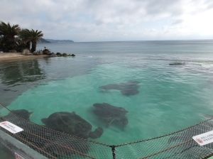 Turtle at Kamogawa Seaworld