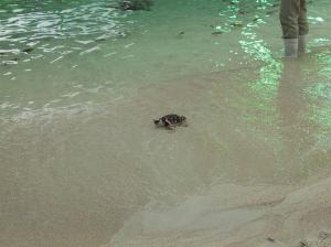 Small turtle inside Kamogawa Seaworld