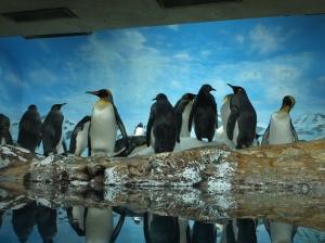 Penguin at Kamogawa Seaworld