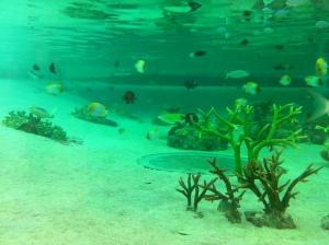 Biota laut