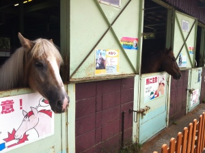 Horse at Mother Farm