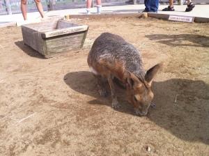 Animal at Mother Farm